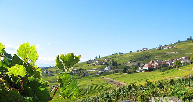 Panorama de Lavaux, Riex